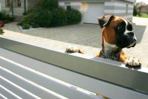 Leitfaden zum Kauf einer Tor- und Zaunanlage - hier Hund schaut neugierig über Zaun