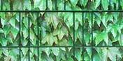 zu diversen Pflanzenmustern